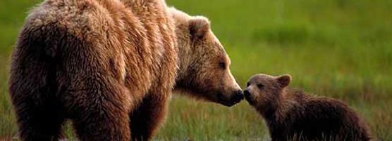 Bear-Aware